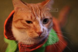 猫の写真・画像素材[1582171]