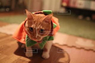 猫の写真・画像素材[1582172]