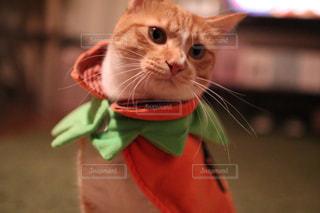 猫の写真・画像素材[1582174]