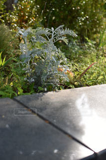 臨港パークの植木の写真・画像素材[2156547]
