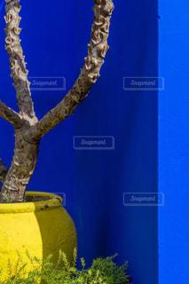 黄色の花と花瓶の写真・画像素材[1001473]