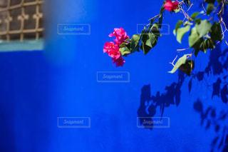 青と白の花の写真・画像素材[1001474]