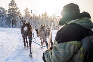 雪の中で馬に乗る人の写真・画像素材[1001491]