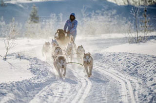 雪の中で馬に乗る人の写真・画像素材[1001506]