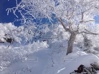 雪の山の写真・画像素材[987088]