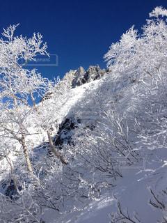 冬山の樹木の写真・画像素材[987089]