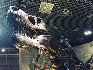 ティラノサウルスの写真・画像素材[984689]