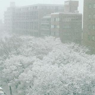 雪のけやき並木 - No.984691