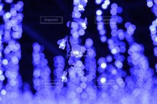 藤のイルミネーションの写真・画像素材[984915]