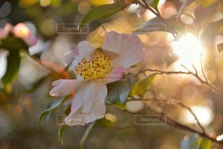 頑張って咲いてる花の写真・画像素材[985656]