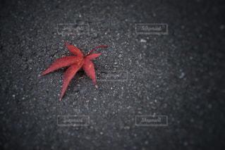 落ち葉の写真・画像素材[985730]