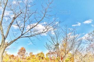 枯れ木の写真・画像素材[985733]