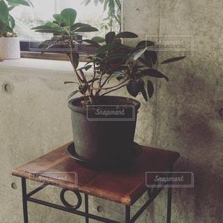 カフェのグリーンの写真・画像素材[985846]
