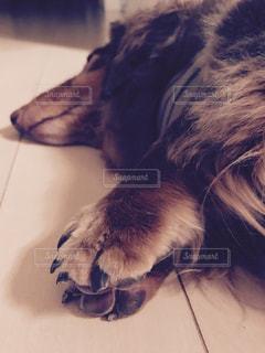 犬のお願い - No.986661