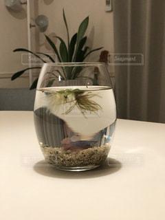 テーブルの上の熱帯魚の写真・画像素材[986684]