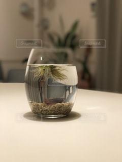 テーブルの上の熱帯魚の写真・画像素材[986686]