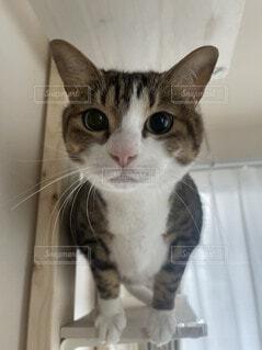 チュール待ちの猫ちゃんの写真・画像素材[4913766]