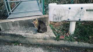 座った野良猫 - No.993207