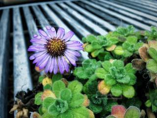 水滴のついた花の写真・画像素材[1003823]