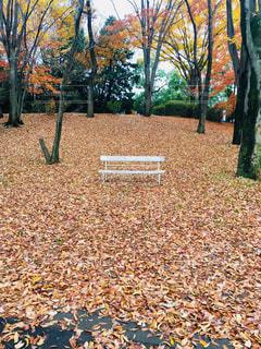 秋の公園のベンチ - No.1007560