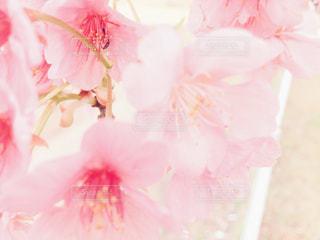 桜の花のクローズアップ - No.1107836