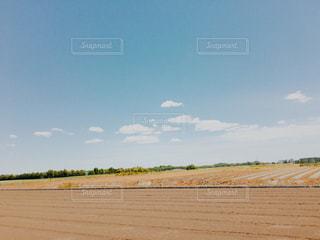 初夏の畑と青空の写真・画像素材[1319147]