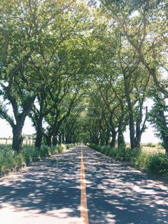 近くの木のアップの写真・画像素材[1367906]