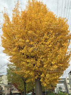 建物の前にツリーの写真・画像素材[988005]