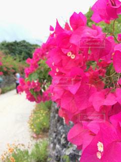 植物にピンクの花の写真・画像素材[1001115]