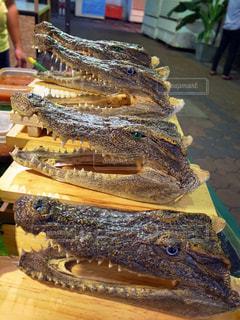 タイ・チェンマイのナイトマーケットのオーストラリアワニ料理屋台の写真・画像素材[990083]