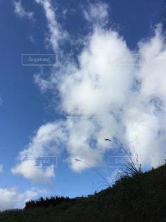青い空とススキの写真・画像素材[2721192]