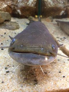 魚をクローズアップするの写真・画像素材[2728556]