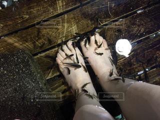 ドクターフィッシュで足の角質を食べてもらいましたの写真・画像素材[2728970]