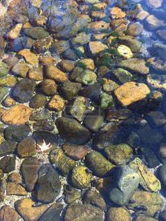水面に浮かぶ紅葉の写真・画像素材[2769940]