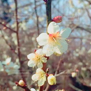 木の花の花瓶の写真・画像素材[1017325]