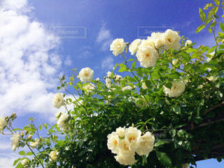 曇りの日に花の花瓶の写真・画像素材[1024936]