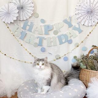 猫の誕生日の写真・画像素材[1865655]