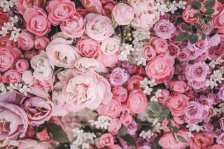 ピンクのお花素材の写真・画像素材[2184819]