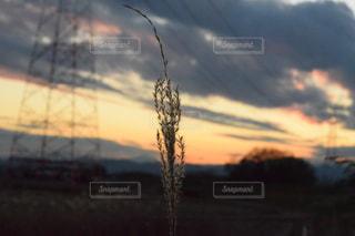 すすきと夕焼けの写真・画像素材[988881]