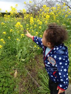 黄色の花の人の写真・画像素材[989162]