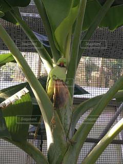 緑の葉に緑の鳥が...の写真・画像素材[989261]