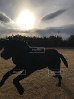 夕日の庭を走る犬の写真・画像素材[989074]