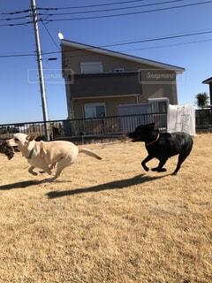 庭を走る犬の写真・画像素材[989377]