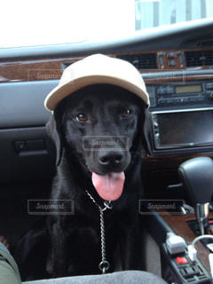 車の座席に座っている犬の写真・画像素材[989499]