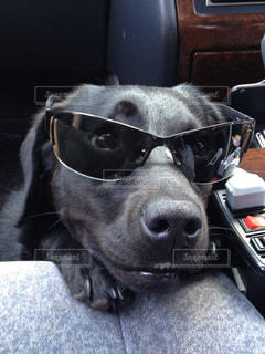 車に乗っている犬の写真・画像素材[989500]