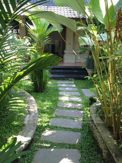 庭園の緑の植物の写真・画像素材[989505]