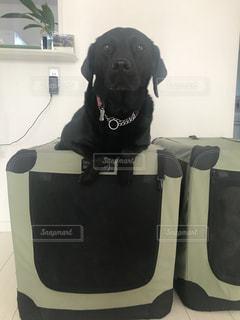 リビング犬の写真・画像素材[1007197]