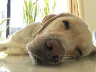 うたた寝の顔の写真・画像素材[1030202]