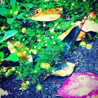 道端のカラフルな花の群しの写真・画像素材[2347354]