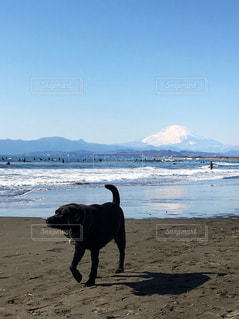 犬🐶と富士山🗻の写真・画像素材[990845]
